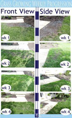 How To Grow Grass Fast Grow Grass Fast Growing Grass Turf Builder