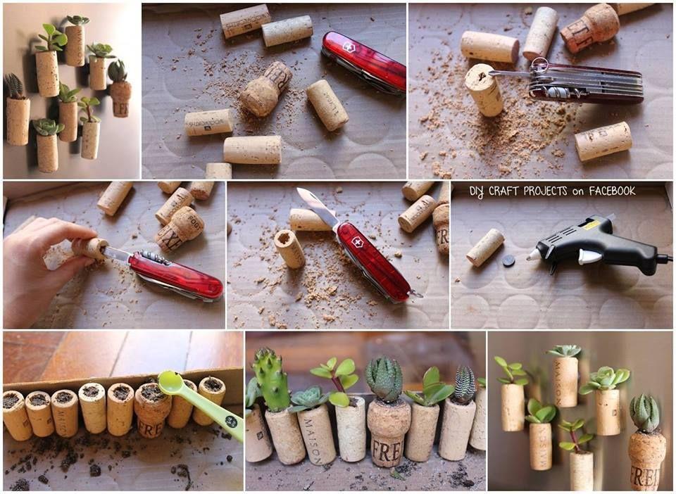 Hauswurz selber züchten | Hauswurz | Pinterest | Hauswurz, Züchten ...