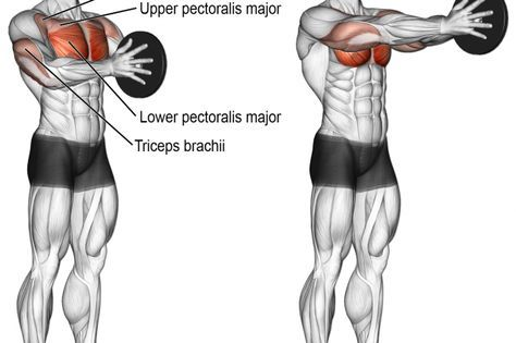 best chest exercises for lower and upper chest  page 2 of