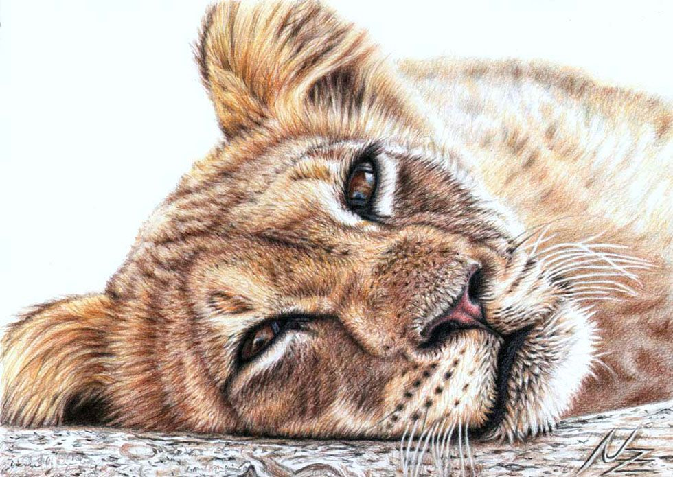 25 Beautiful and Realistic Animal Drawings around the