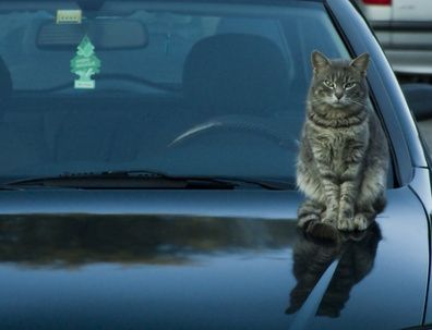 Remove cat urine from your car seats with a few household ...