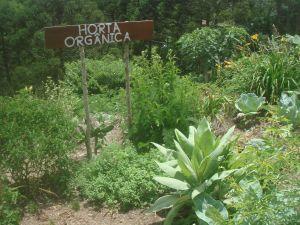 horta111