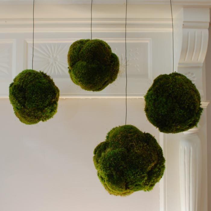 Hanging moss balls - Palle di muschio da appendere al soffitto
