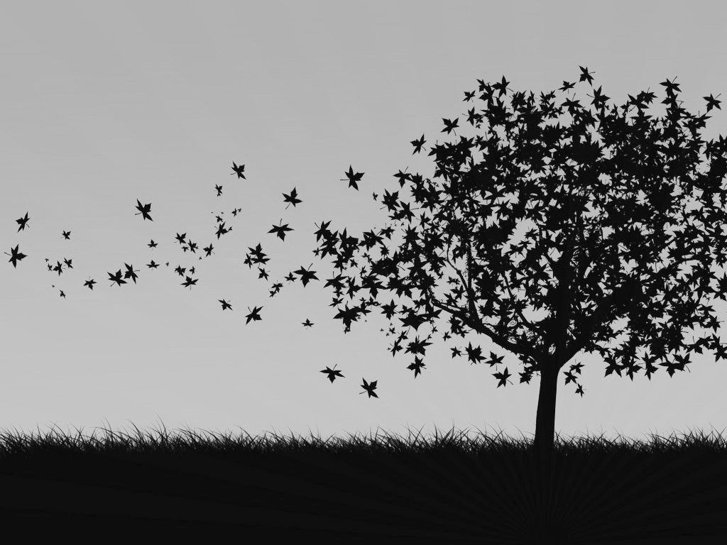 Tree Black And White Wallpaper For Mac Rae Earth In 2019 Black