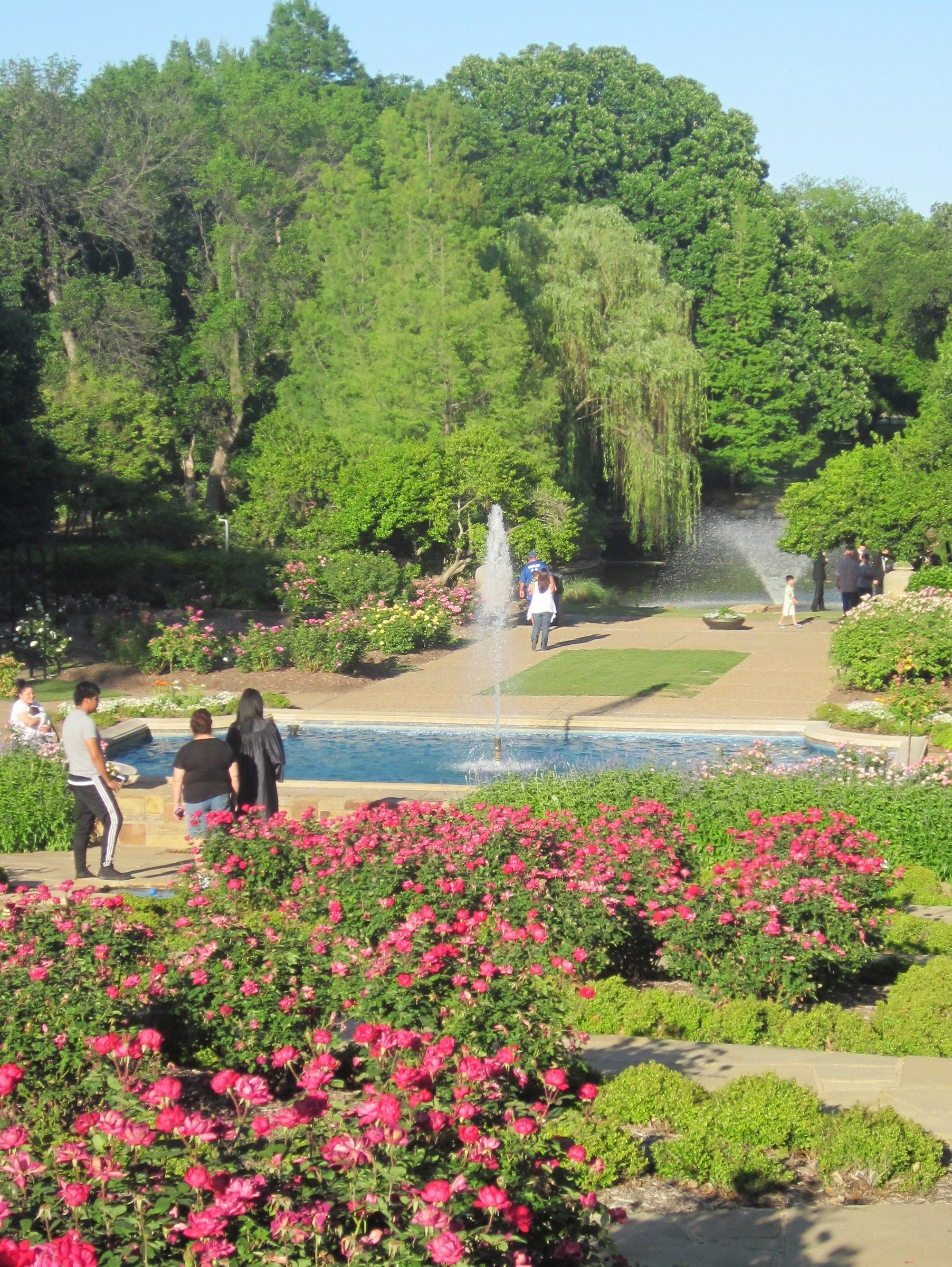 Terraced Rose Garden And Fountains At Fort Worth Botanic Garden