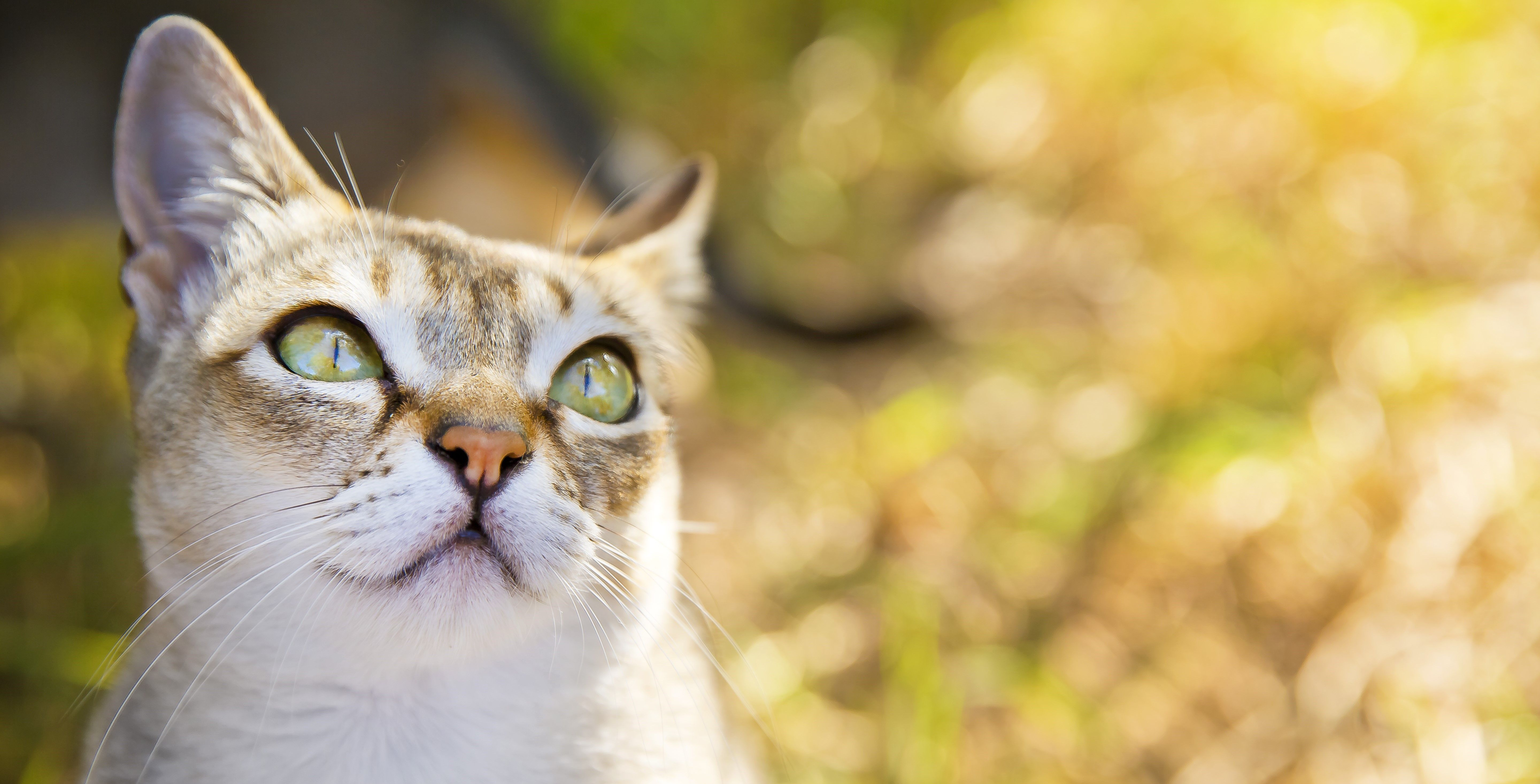 National Animal Safety and Prevention Month Cat facts