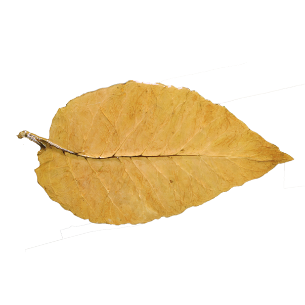 Resin Coated Tobacco Leaf On Wood Tobacco Leaf Tobacco Leaves