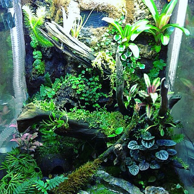 Vivarium Exo Terra 18x18x24 Dart Frogs Leucomelas Bromeliad