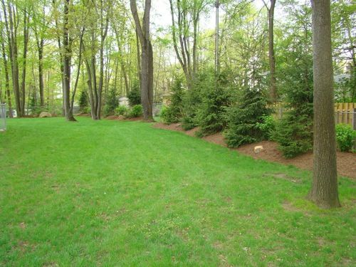 Elevated mulch/trees - Elevated Mulch/trees Backyard Privacy Project Pinterest Lawn