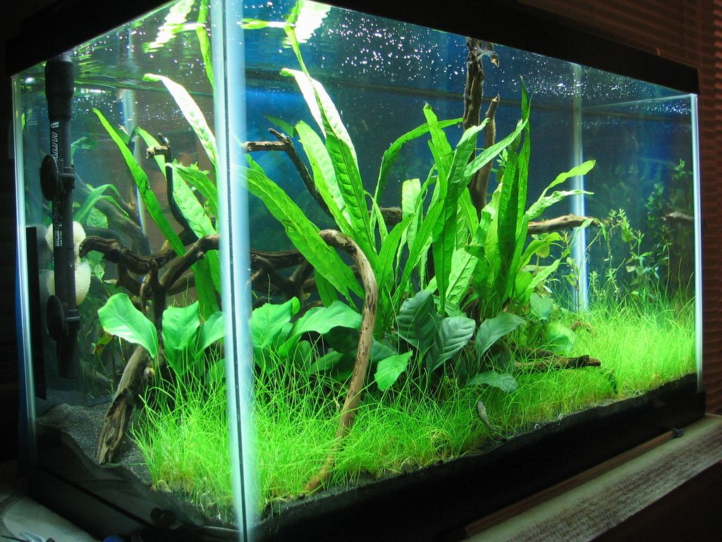 My First Planted Tank 10 Gallon Low Tech Betta Haven Aquascaping Fish Tank Plants 10 Gallon Fish Tank Aquascape