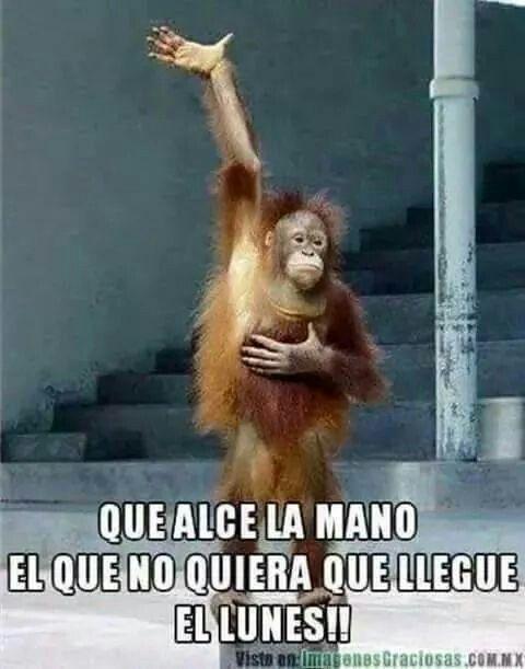 Inicio De Semana Noooo Quiero Ir A Trabajar Monkeys Funny Funny Animals Funny Monkey Pictures