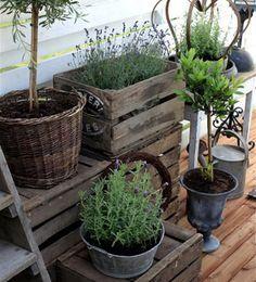 Resultado de imagen para plantas para exterior resistentes for Plantas exterior mucho sol