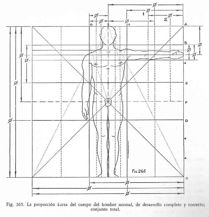 La proporción áurea del cuerpo en el hombre | Esquemas para el ...