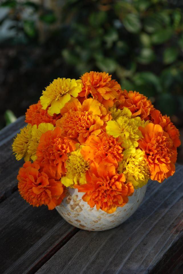 Marigold Bouquet By Kelly Freygang