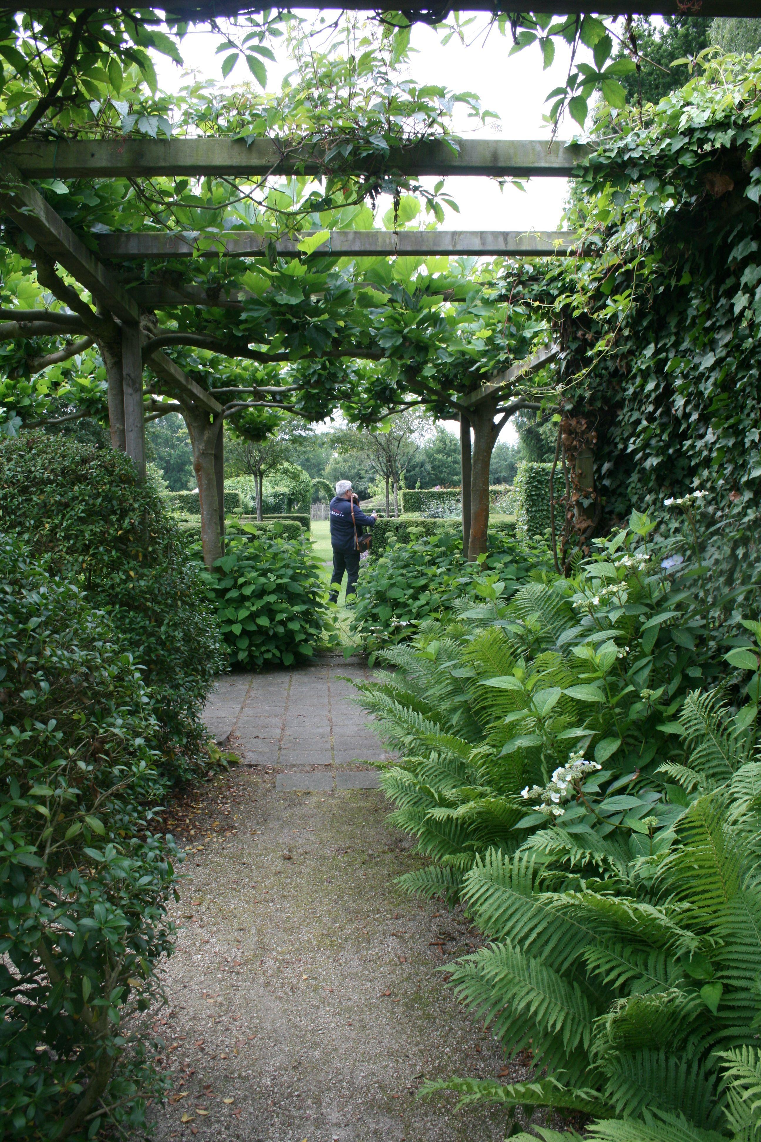 Buchs Farn Gartenreise Belgien Holland Garten Holland Spalier