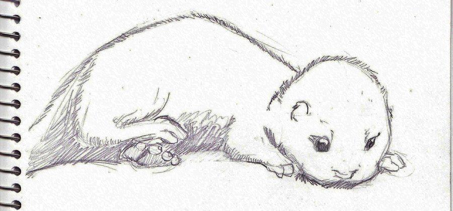Otter Sketch Baby Otter Sketch By Legendarypossum Tattoo Ideas