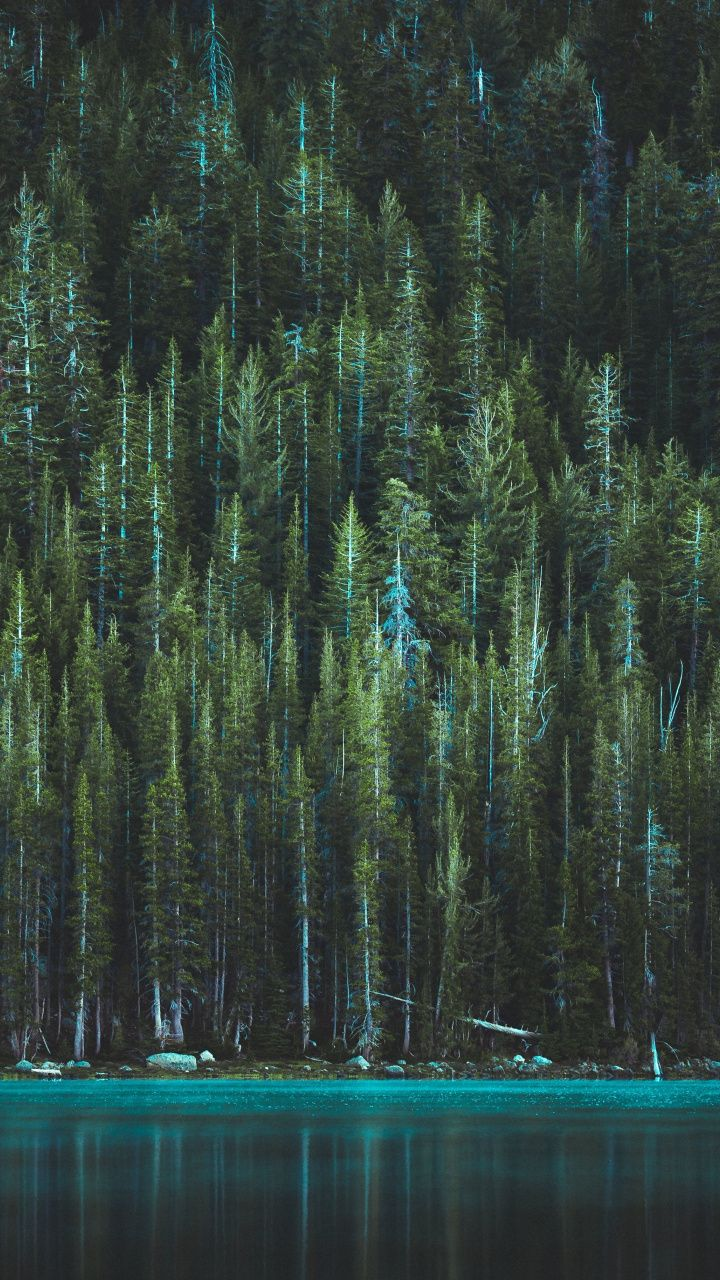 trees, shore of lake, tenaya lake, nature, usa, 720x1280 wallpapertrees, shore of lake, tenaya lake, nature, usa, 720x1280 wallpaper