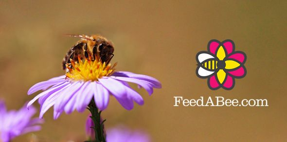 Growing Tips Videos from Garden Expert Lance Walheim Help Create Beautiful Bee-Attractant Habitats. Read now: https://www.bayercropscience.us/news/blog/2015/march/032515-growing-tips-videos-from-lance-walheim-help-create-beautiful-bee-attractant-habitats