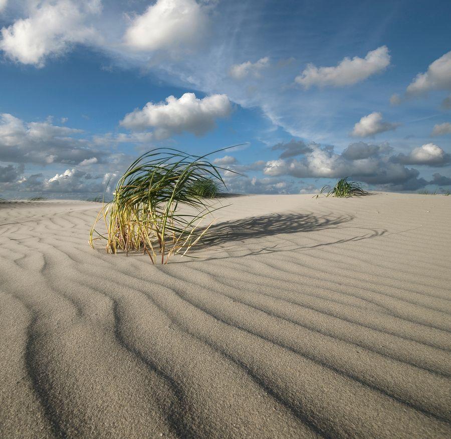 The beach of Schiermonnikoog - a Dutch island Noth Holland Waddeneilanden #essenzadiriviera www.varaldocosmetica.it/en