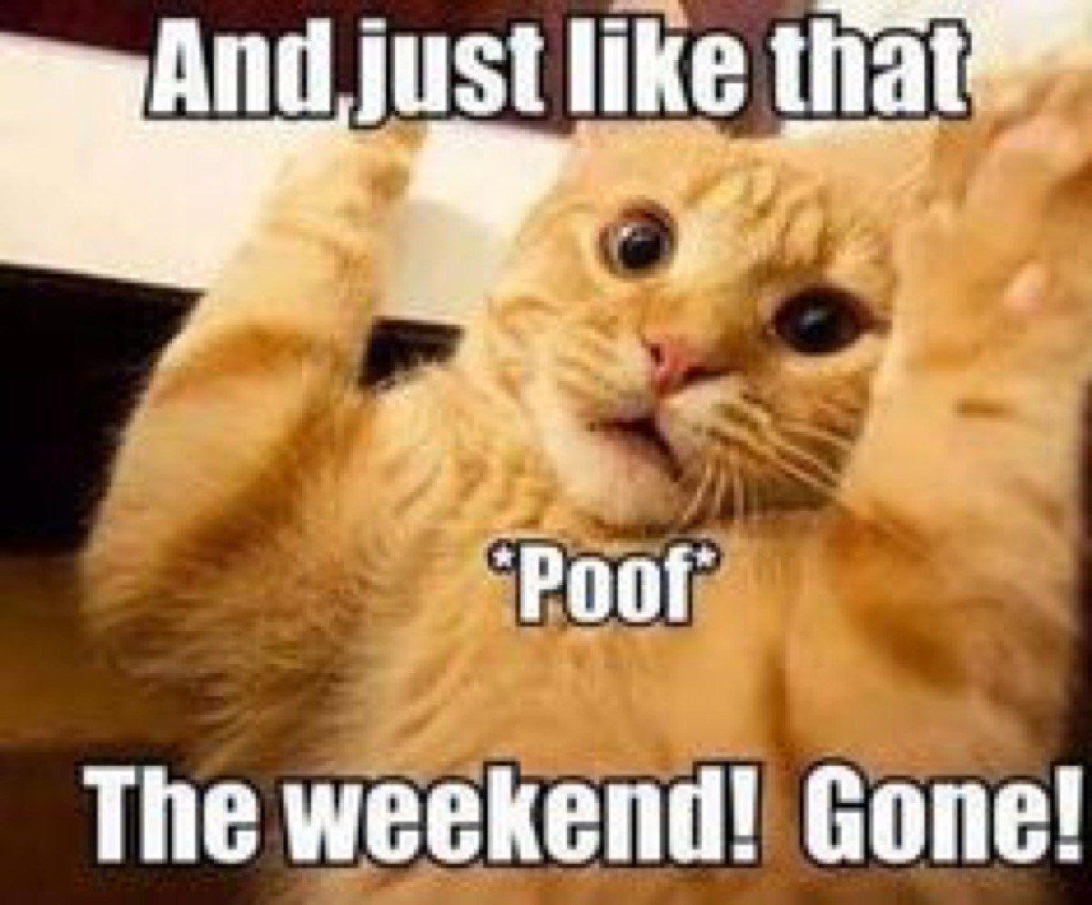 Hugedomains Com Funny Monday Memes Monday Humor Monday Humor Quotes