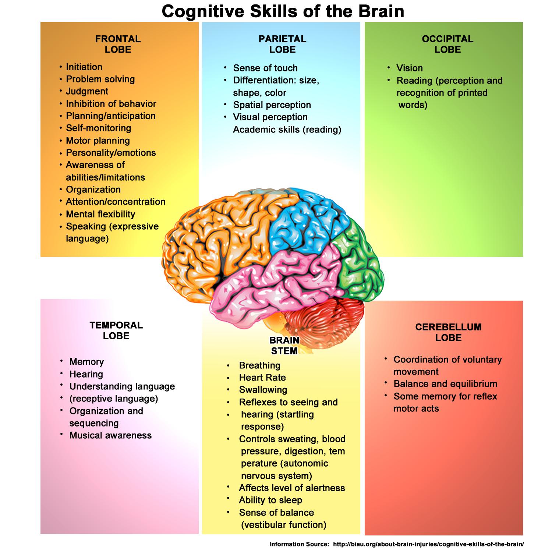 cognitivebrainfunctionchart.png (PNG Image, 1500 × 1500 ...