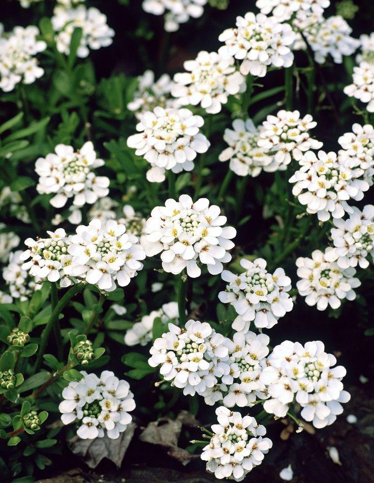 Top 10 Wonderful Flowers That Bloom All Year Long Top Inspired Flowers Perennials Florida Flowers Perrenial Flowers