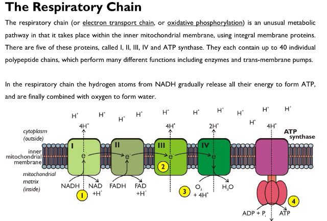 Synoptic essays a2 biology
