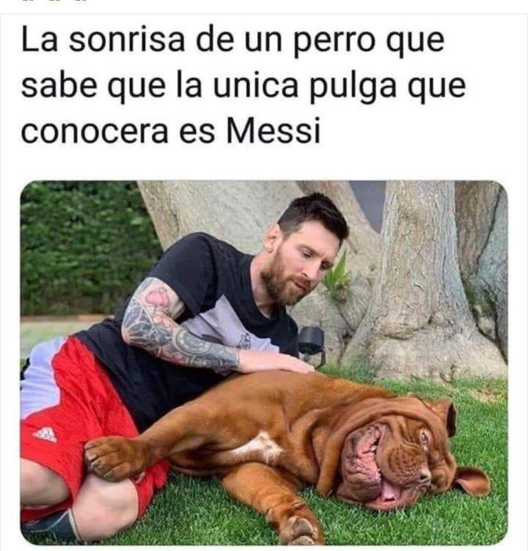 La Sonrisa De Un Perro Great Memes Animal Memes Cute Memes