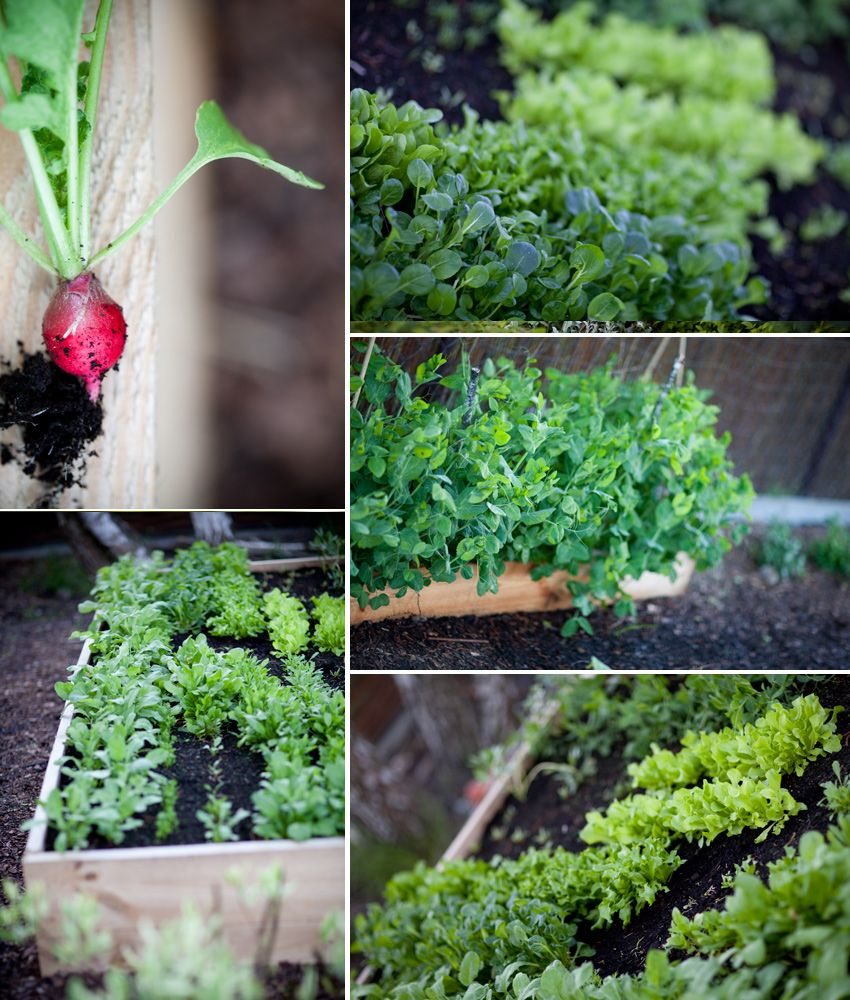 raised bed gardening my way- the best idea for first time gardeners!