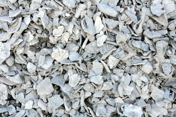 Crushed white shell