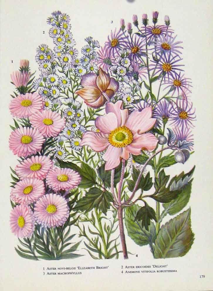 Free Vintage Floral Art Prints Free Download Skull Flower Vintage Art Print Book Page Hd Wallpaper Floral Prints Art Free Art Prints Floral Artwork
