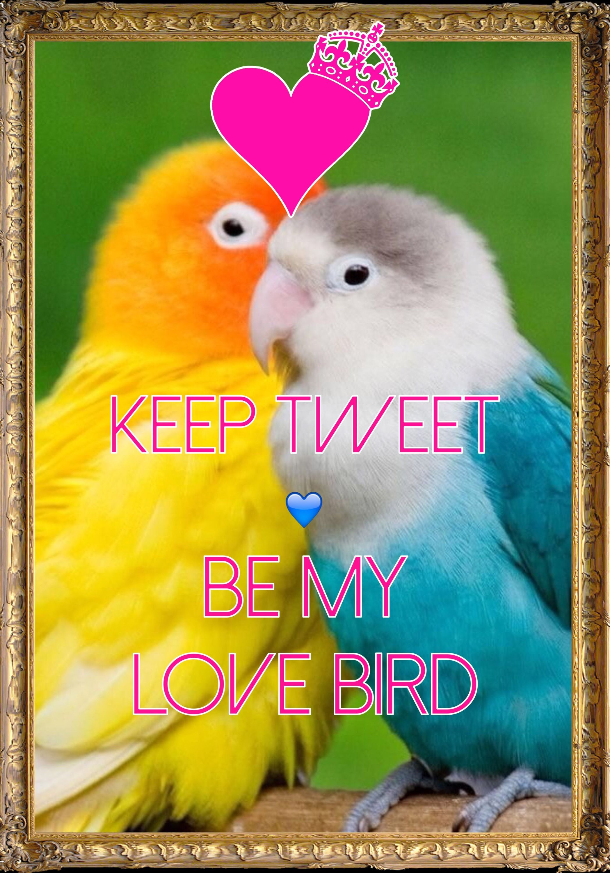keep tweet be my love bird / Created with Keep Calm and Carry On for ...
