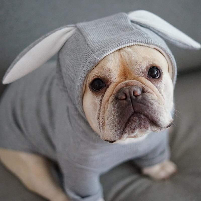 Bunny Costume Bulldog Puppies Dog Behavior French Bulldog Puppies