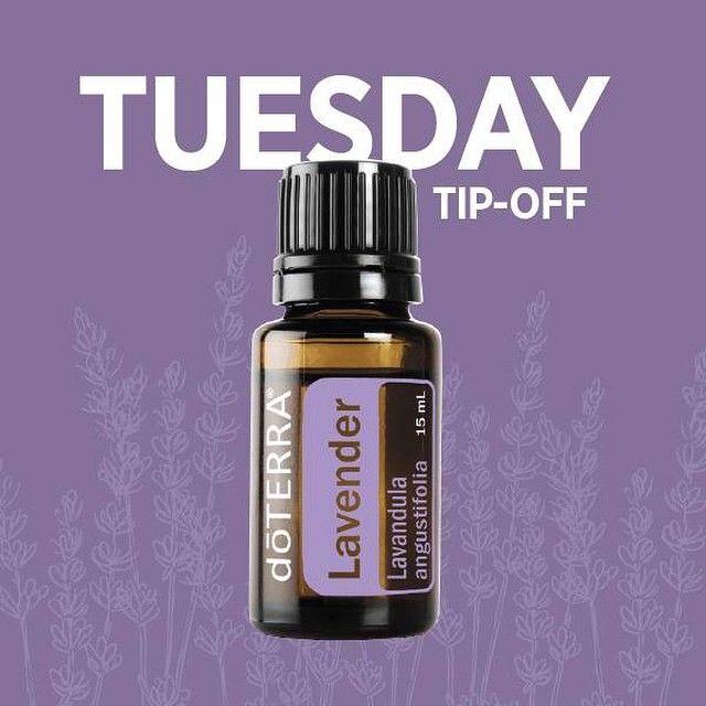 Image result for lavender tip off