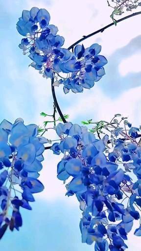 Sky flower 🦋