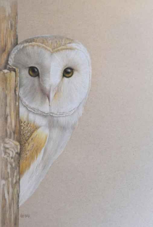 Barn Owl (2016) Pencil drawing by Debra Spence | Artfinder