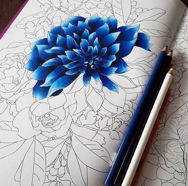 Another Great Pic Flower Drawing Color Pencil Art