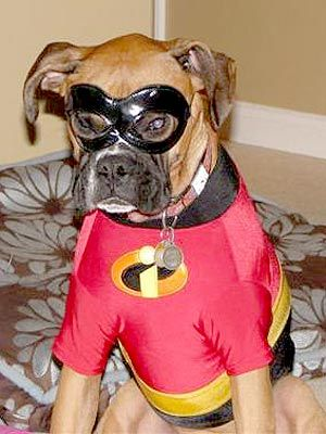 The One Thing The Incredibles Were Missing Was This Dog Dog