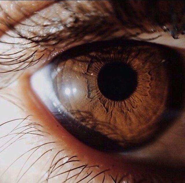 Ruskeat Silmät