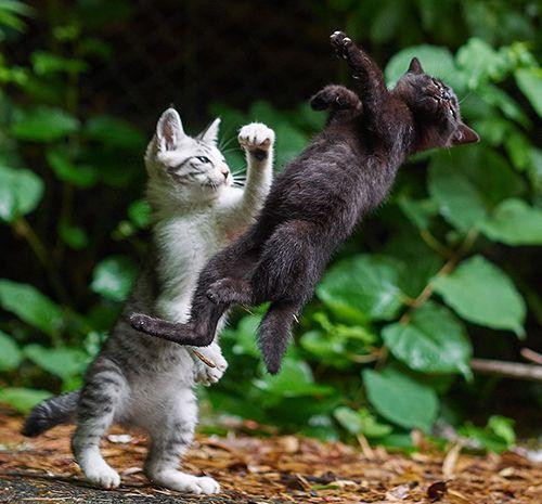 Hilarious kittens fight http://ift.tt/2A1vdcD