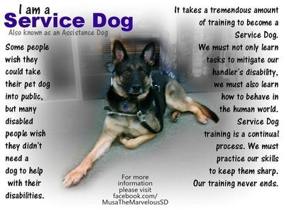 Image Result For My Service Dog Quotes Service Dogs Quotes