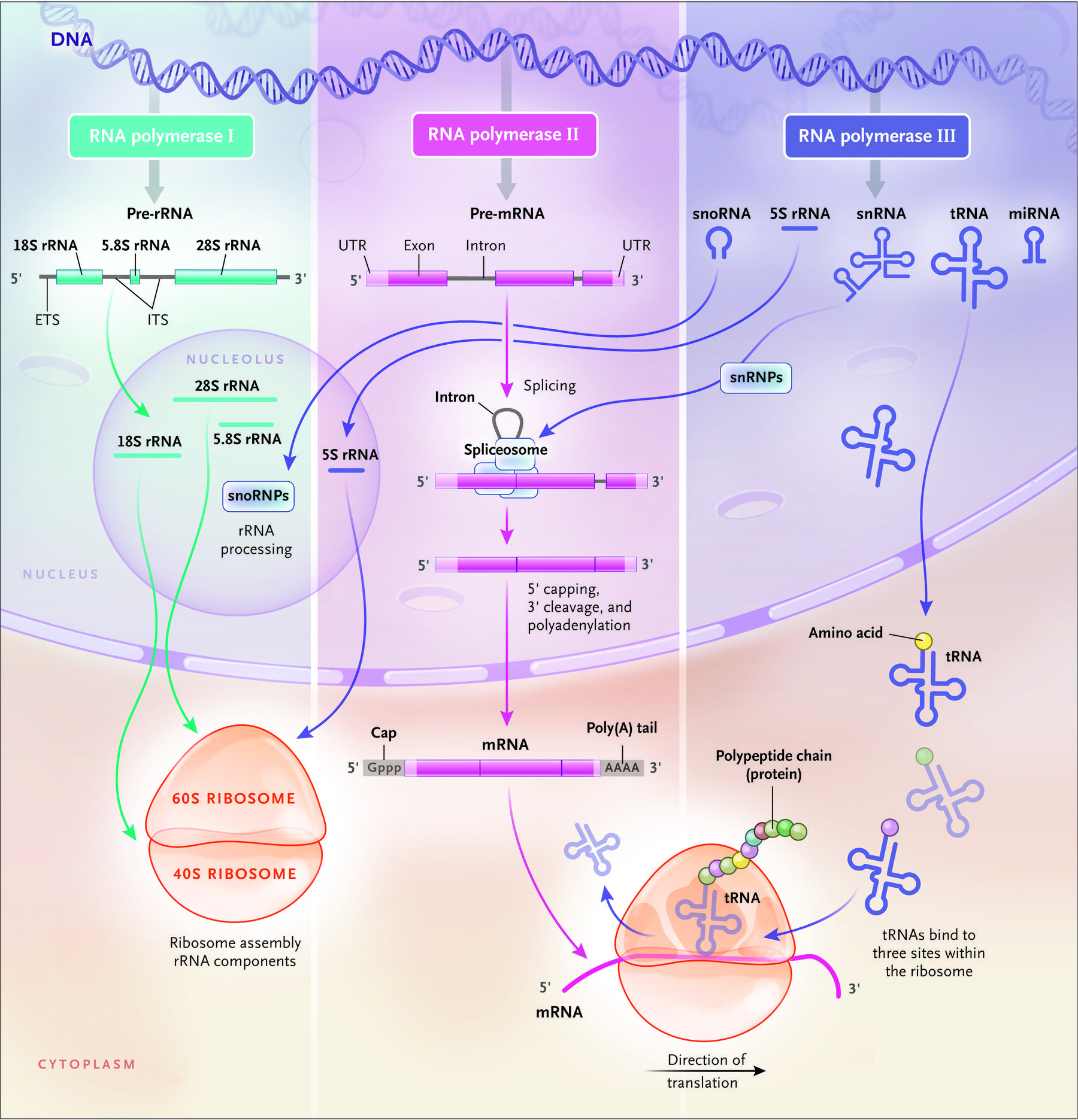 Unveiling The Rna World