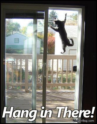 Cat Door Climb Gif