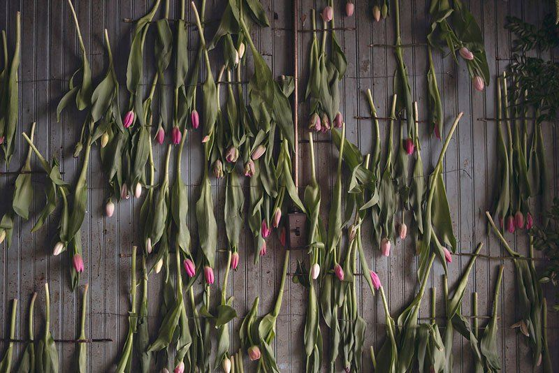 Fleuristes Tourner maison abandonnée Flower Sanctuary Into (18 Photos)