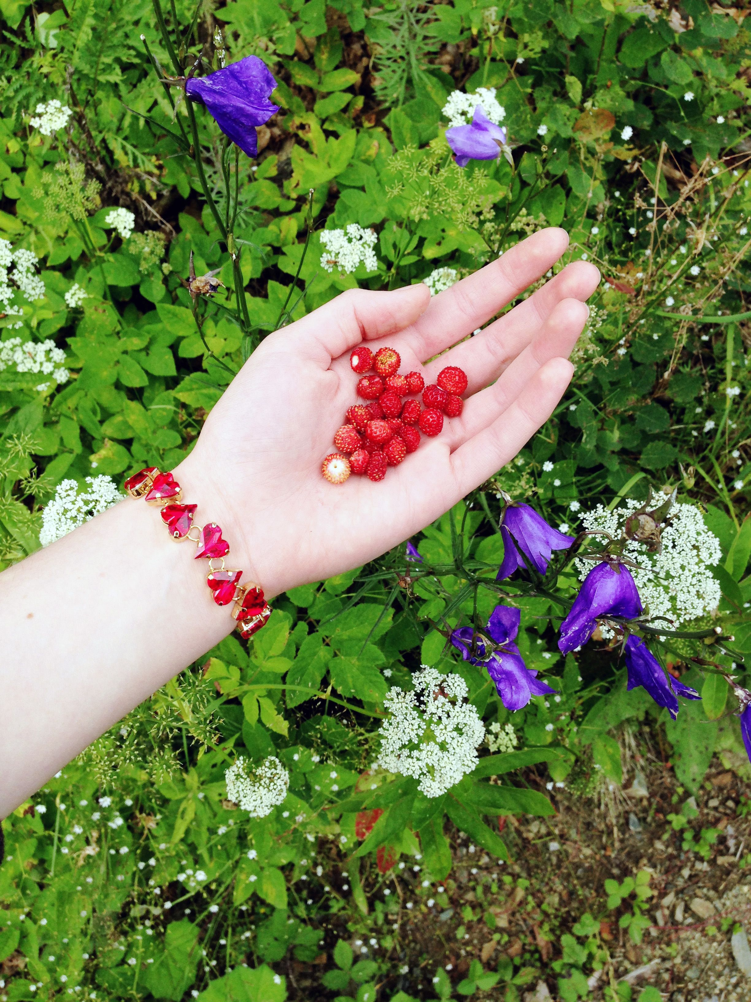Finally it's summer! Strawberry season is at its high point & you can find them everywhere… In the Austrian forests, where the summer heat won't kill you, you'll find #wildstrawberries. A delicious snack after a long hike through the nature. But of course no one can leave home without a piece of jewelry. This bracelet is made of Swarovski 4810 #SweetHeart Fancy Stones in Light Siam. Read more → http://bit.ly/1GtHRwj