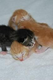 24 hour live video feed of rescued kittens with momma? Yes, please. Excellent for stress relief!