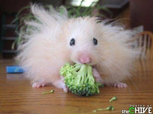 broccoli?!