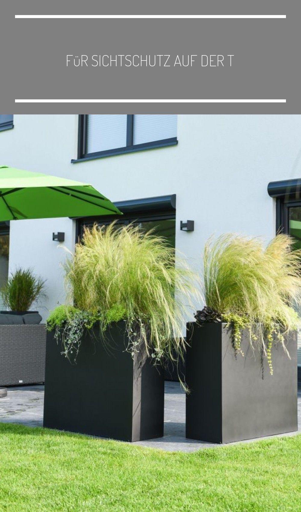 Fur Sichtschutz Auf Der Terrasse Sorgen Diese Pflanzkubel