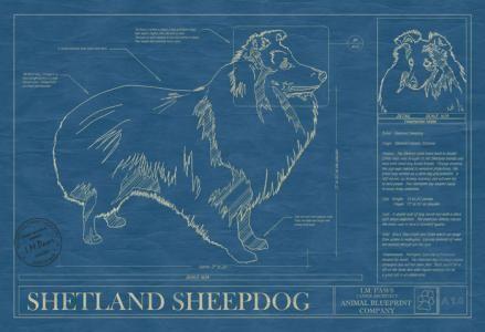 Animal blueprint company shetland sheepdog dog print dog animal blueprint company shetland sheepdog dog print malvernweather Gallery