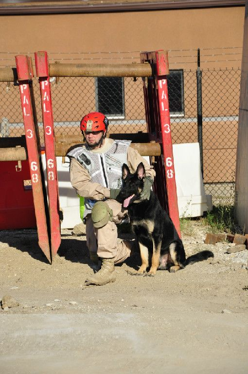Disaster Dogs Of Illinois Ddi Is A 501 C 3 Non For Profit
